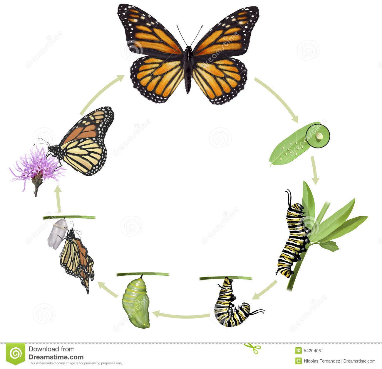 Download 4 182 Monarch Butterfly Stock Illustrations