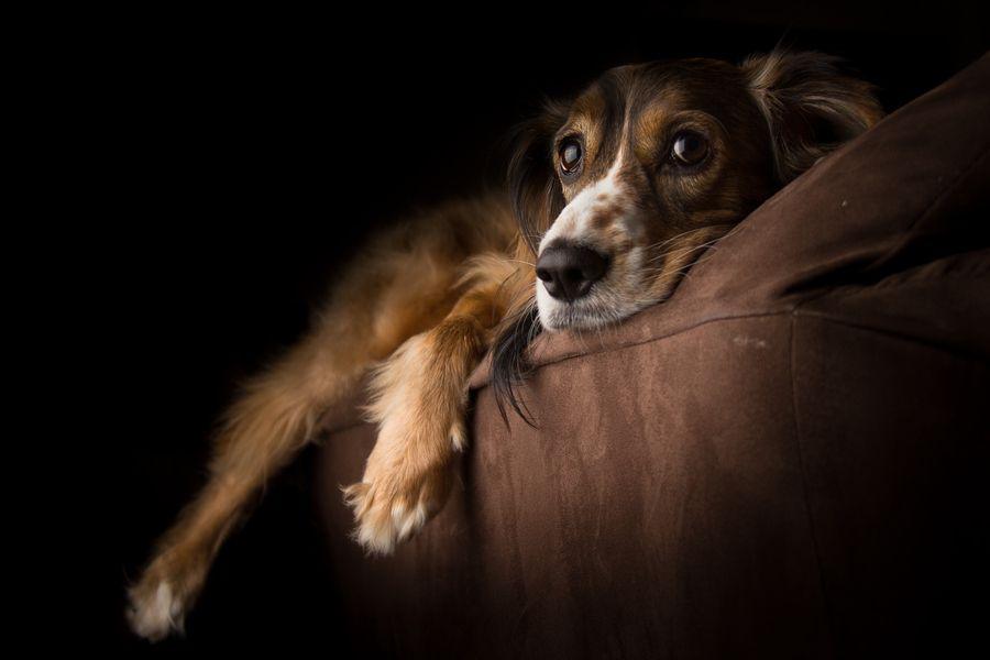 Pin Von Petra Glier Auf Farben Braun Schwarz Mit Bildern Ich Liebe Hunde Tiere Hund Hund Portraits