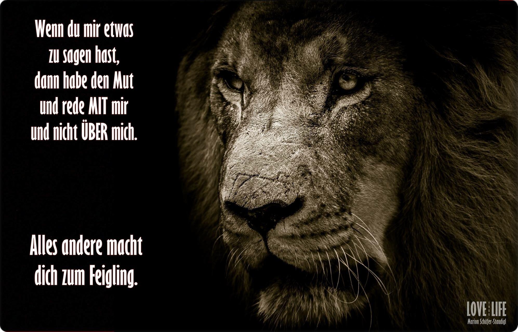 Löwen Zitate