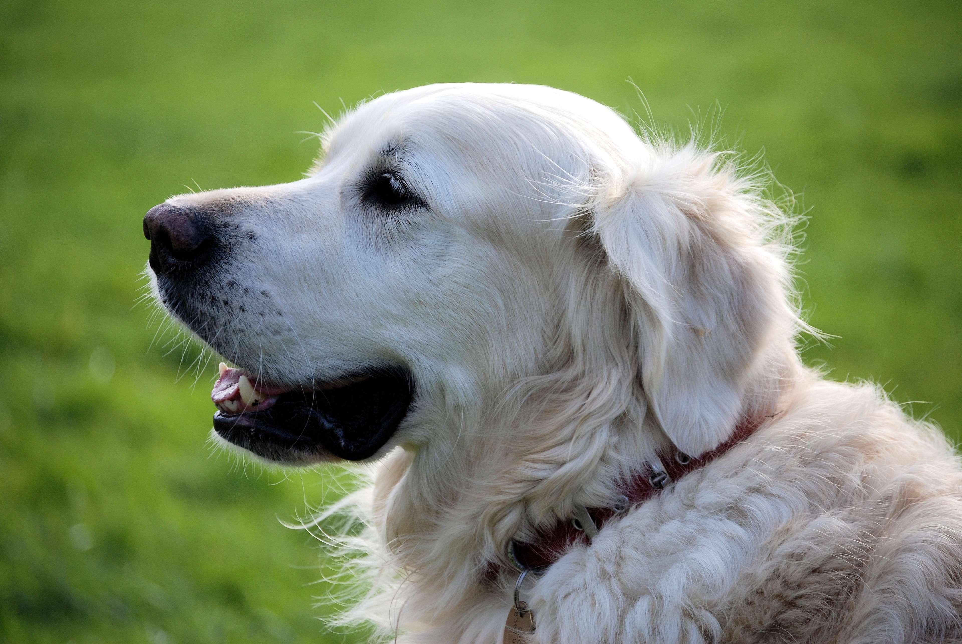 Fantastic Fluffy Canine Adorable Dog - 4d0d24091b768dfeaf0768f80c0171cf  2018_155028  .jpg