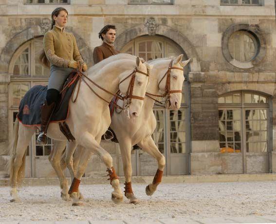 Versailles Equestrian Academy || equestrian equine cheval pferde caballo | cremello dressage trotting