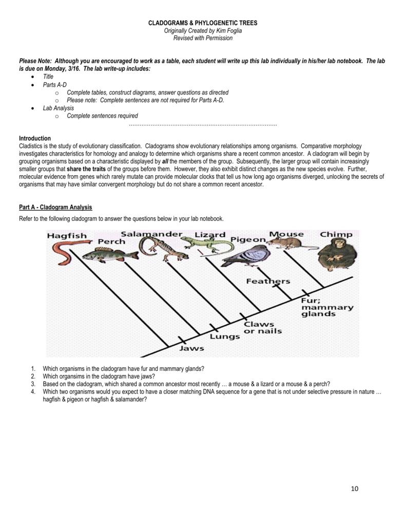 Cladogram Practice Worksheet : cladogram, practice, worksheet, Cladogram, Practice, Worksheet, Answers