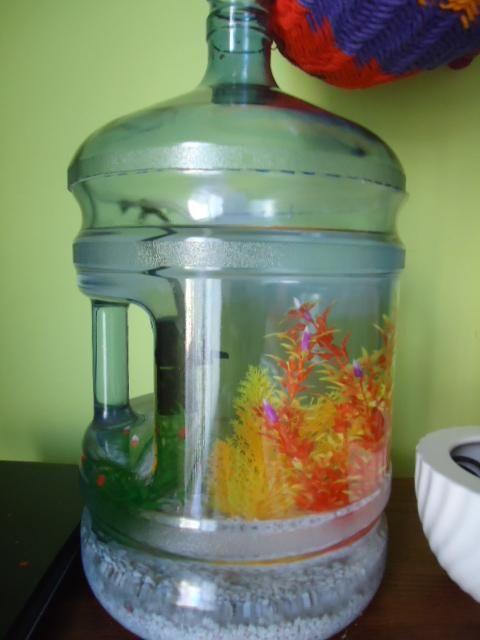 5g water jug = fish tank :)