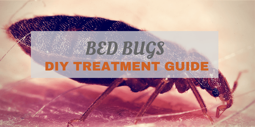 Home Remedies for Bed Bugs How To Get Rid of Bed Bugs
