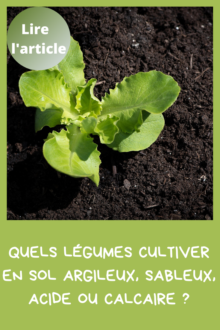 Quels légumes cultiver en sol argileux, sableux, acide ou calcaire