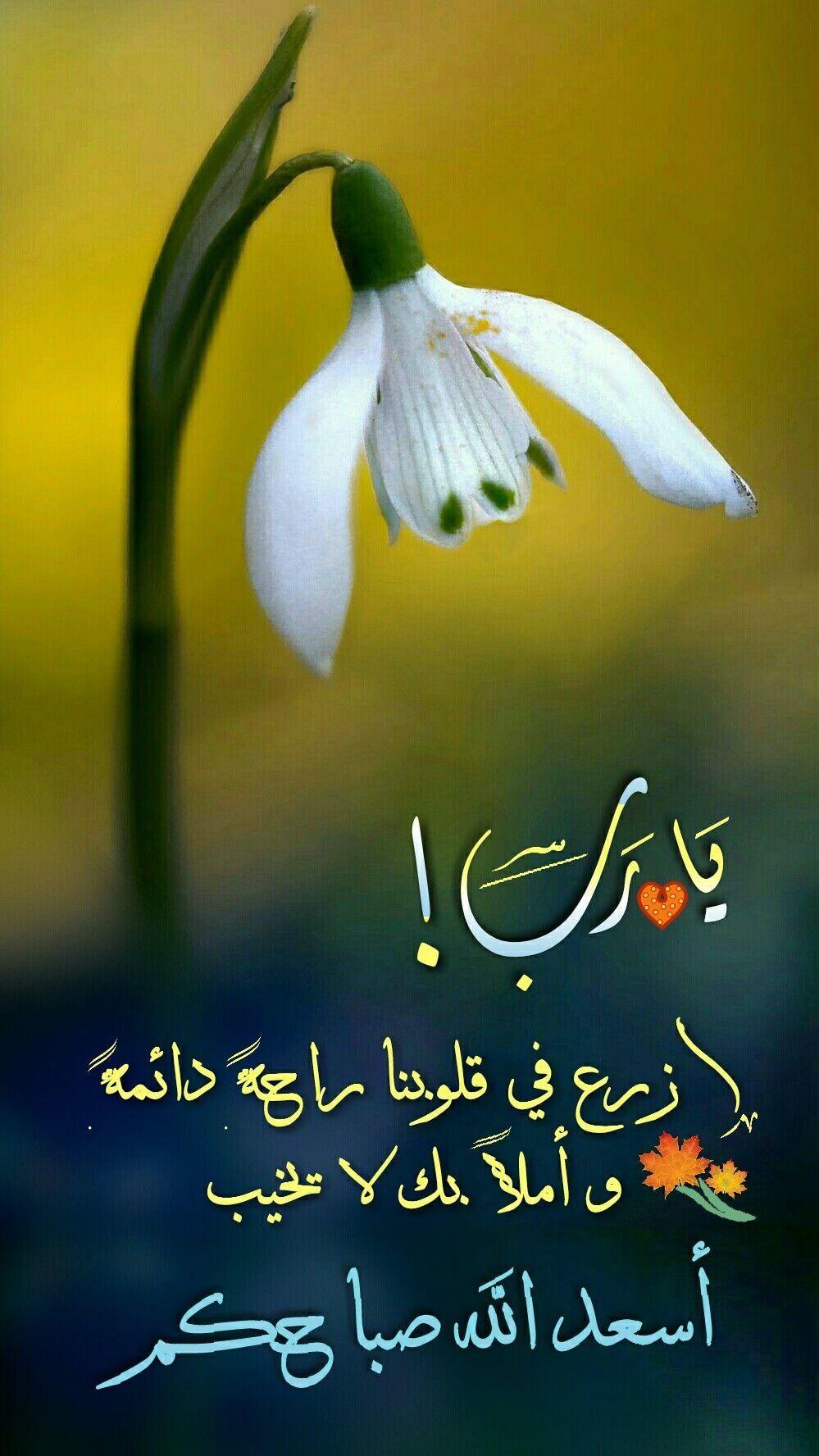 يا رب ازرع في قلوبنا راحة دائمة وأملا بك لا يخيب أسعد الله صباحكم Good Morning Arabic Good Morning Cards Beautiful Morning Messages