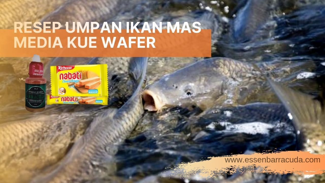 Umpan Ikan Mas Media Wafer Ikan Mas
