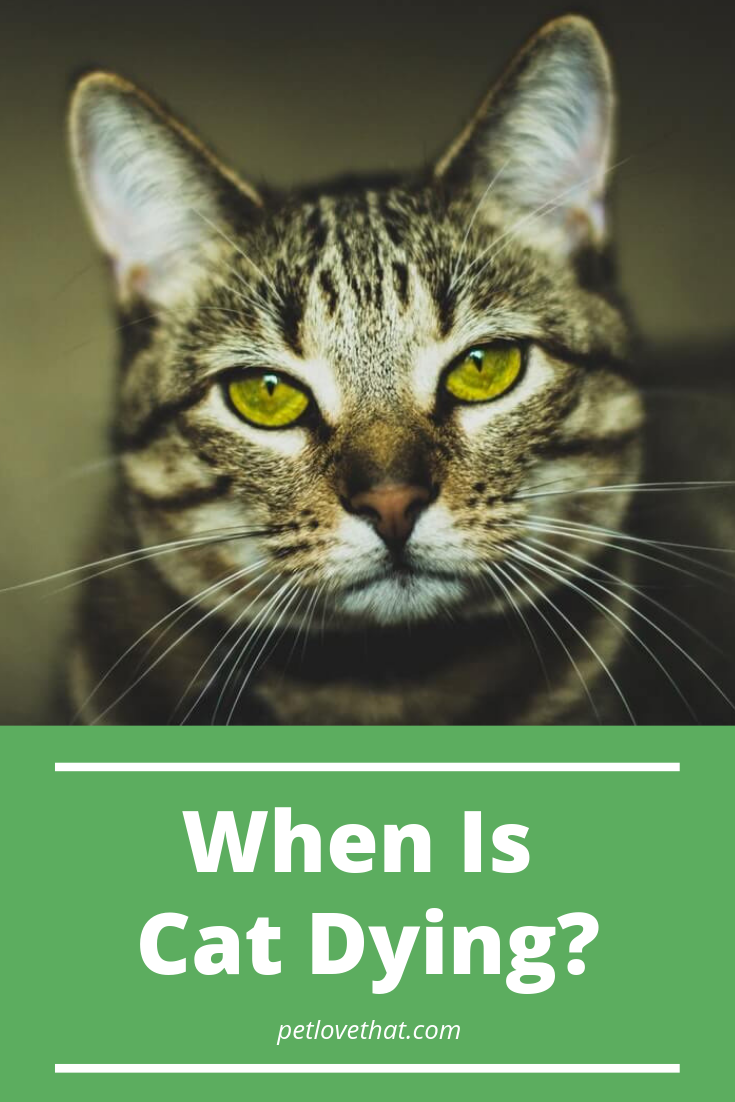 When Is Cat Dying? How Long Cats Live and Causes to Death