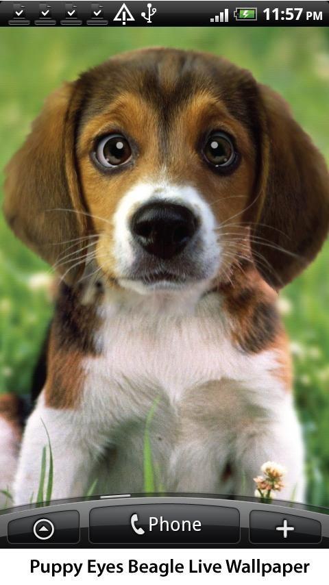 Begal Puppies Puppy Beagle Live Wallpaper V 1 08 Apk Download