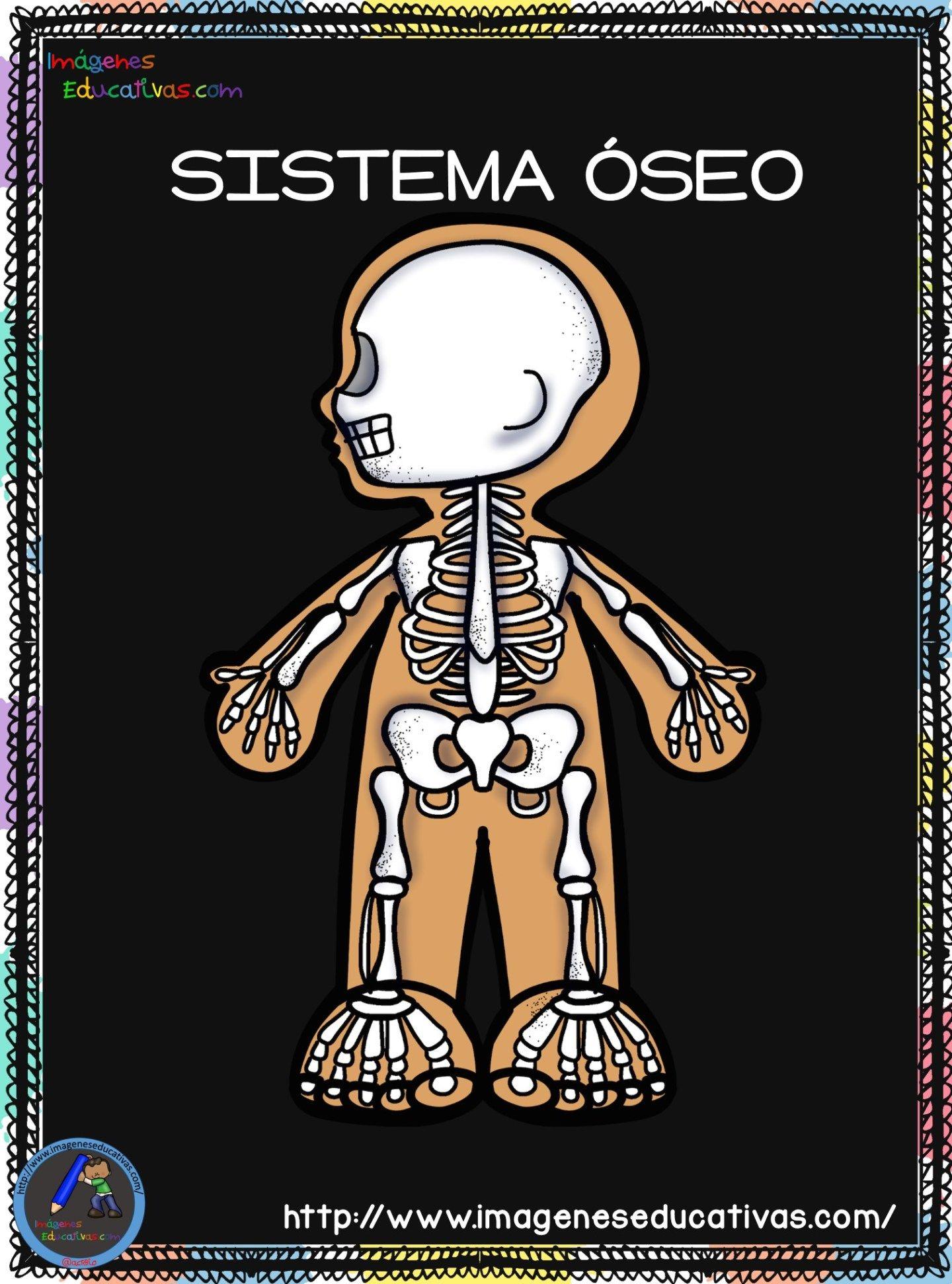 Cuaderno Del Cuerpo Humano Aparatos Y Sistemas Para Trabajar En