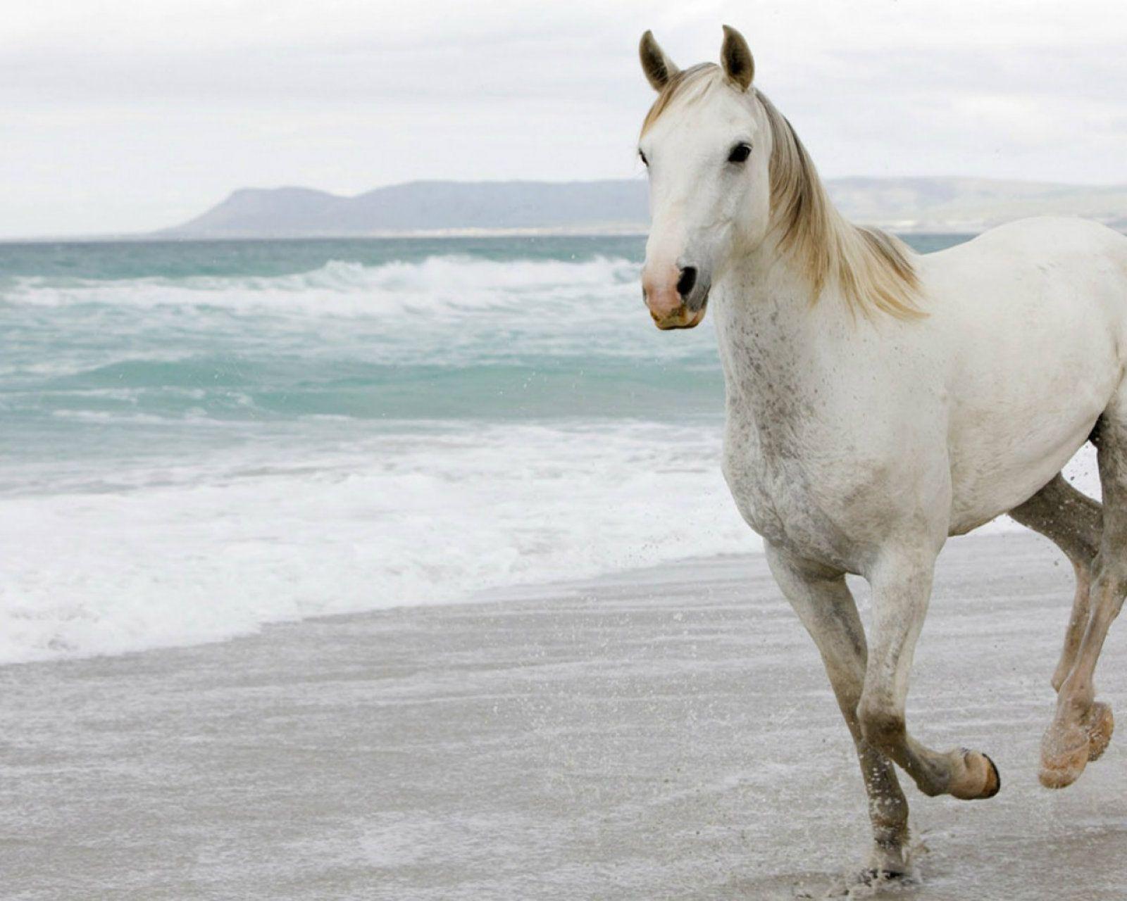 Freenom World Horses Horse Wallpaper White Horses