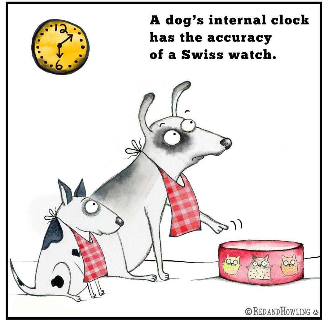 Pin by Sandi Kramer on ️Fur Babies Dog love, Crazy dog