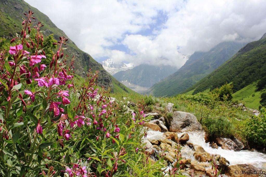 давай долина цветов уникальный уголок индии фото способ хорош для