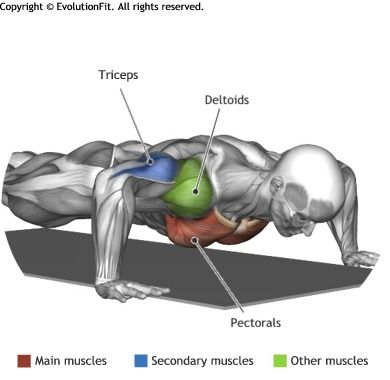 CHEST - PUSH UP | Health & Workout | Pinterest | Muskel und Fitness