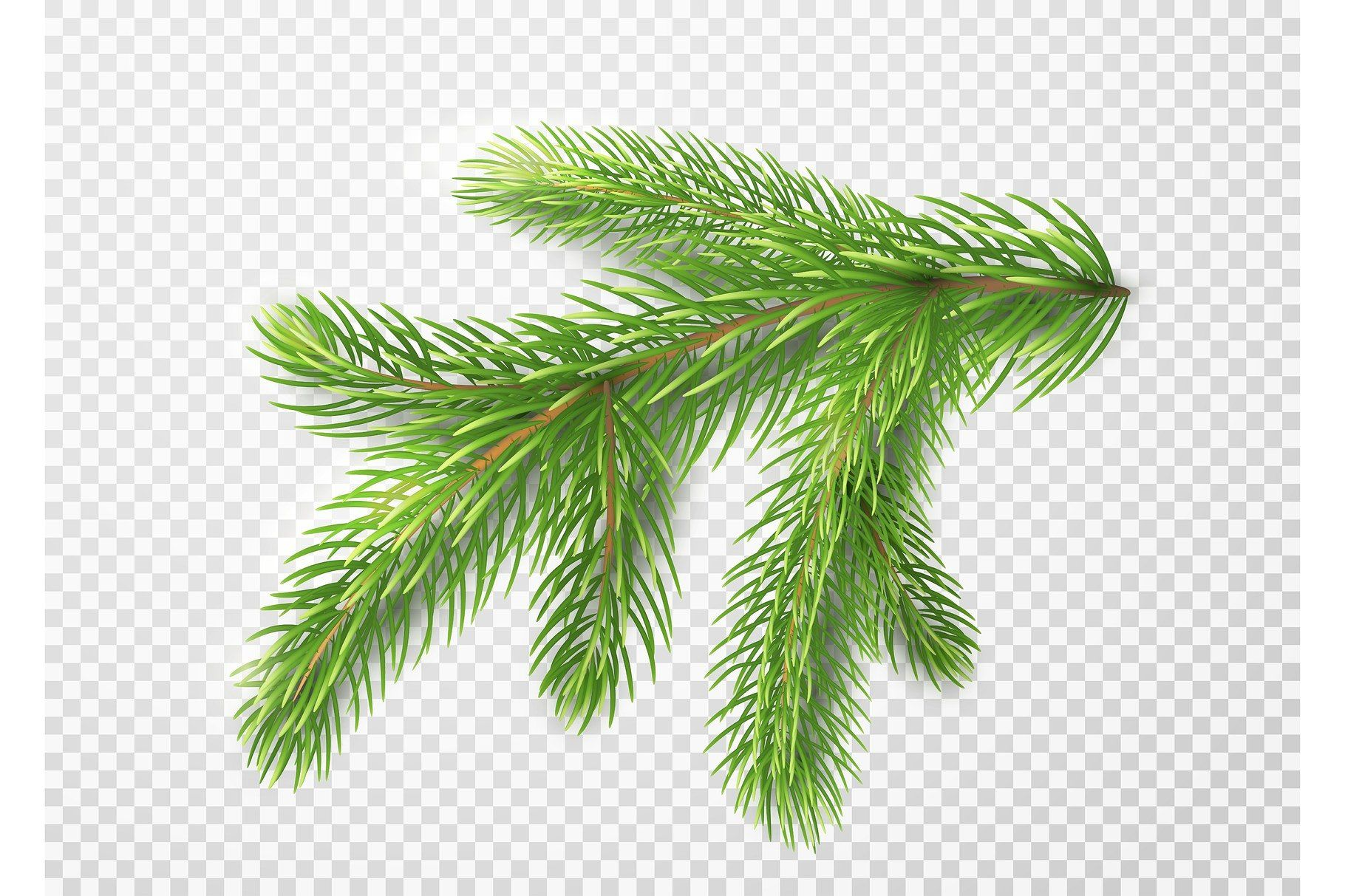 Fir Branch Christmas Tree Pine Needles Isolated On Transparent Background Leaf Decor Christmas Paintings Christmas Drawing