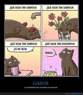Pin de Daria Baez en gatos 3 No te entiendo, Gatos y Leelo