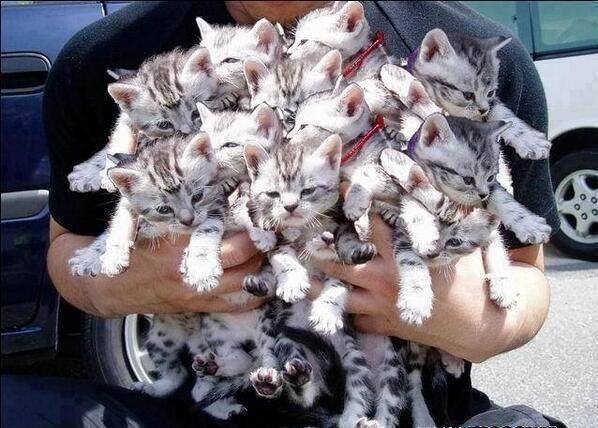 両手いっぱいの子猫
