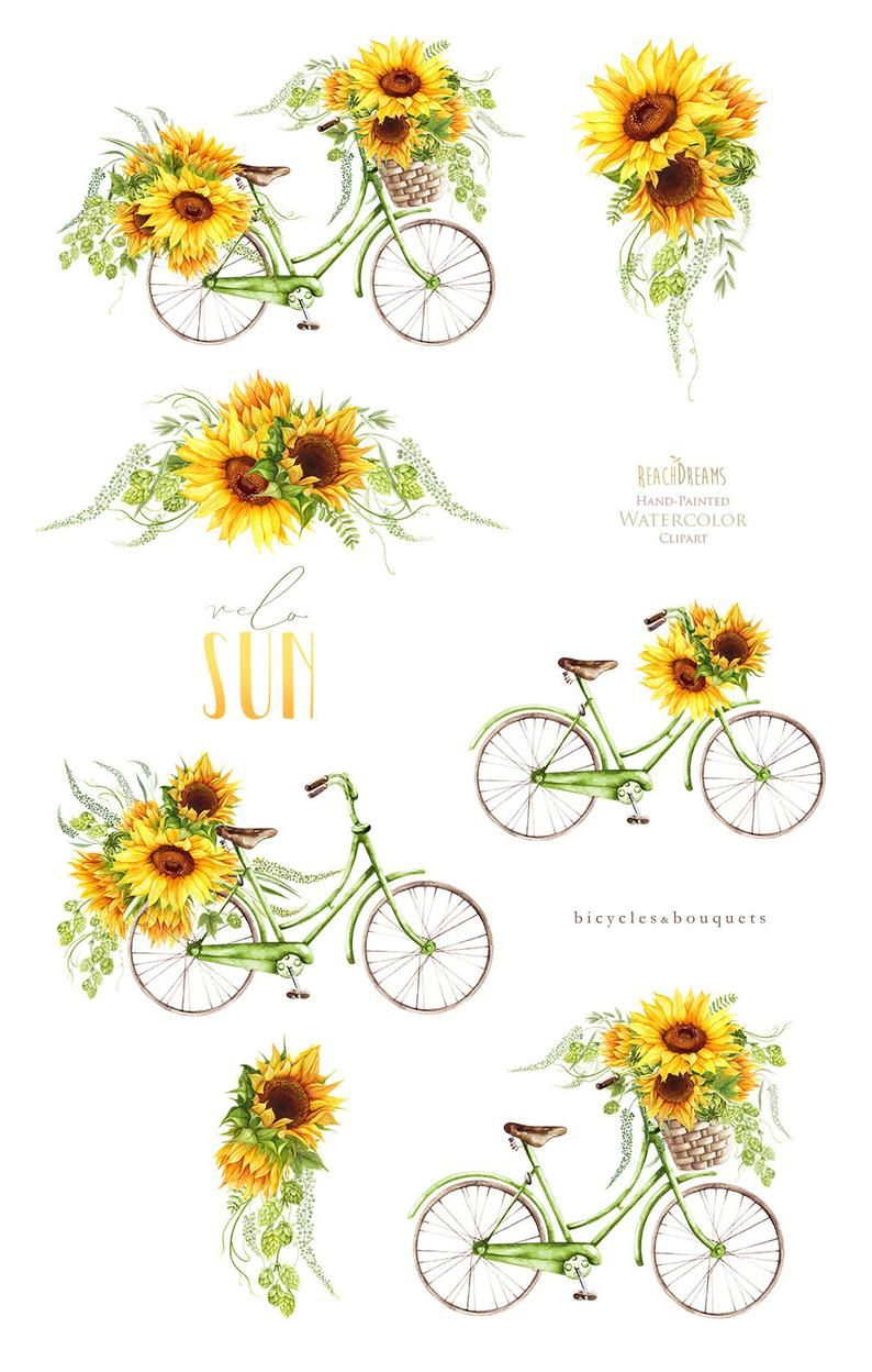 Sunflower Watercolor Flower clipart, vintage, bicy