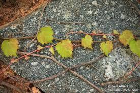 Resultado de imagen para fotografias bonitas de otoño