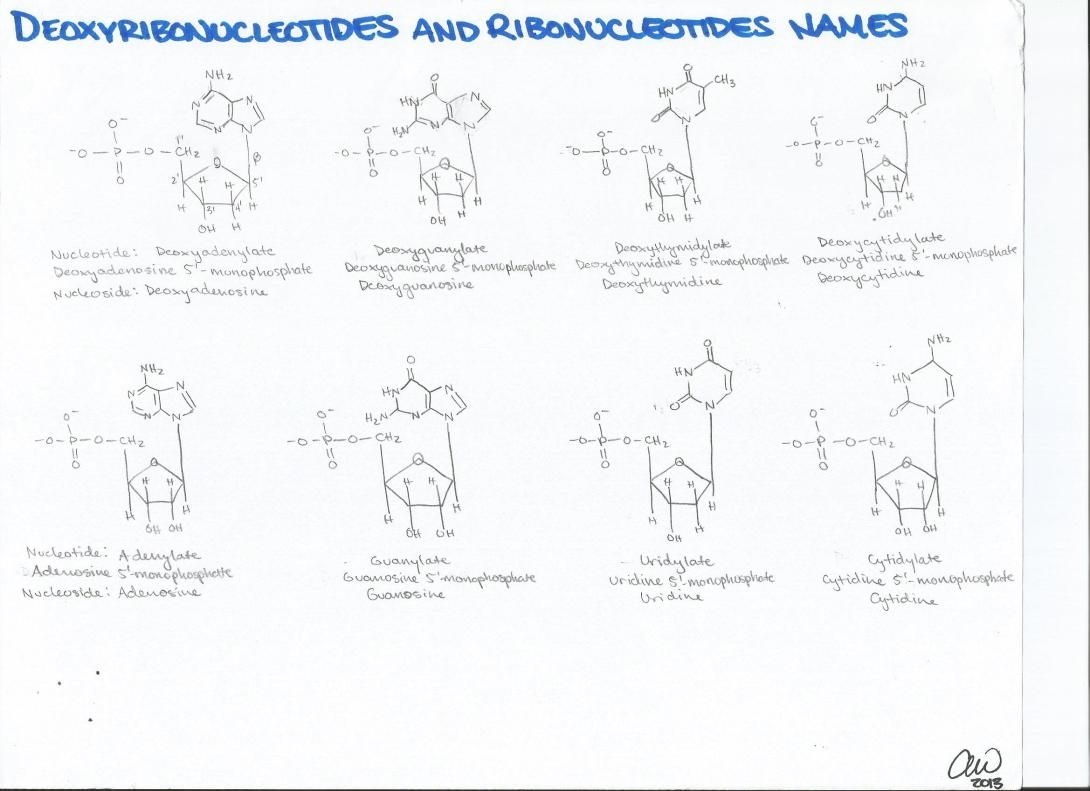 Biochemistry Study Guides In With Images