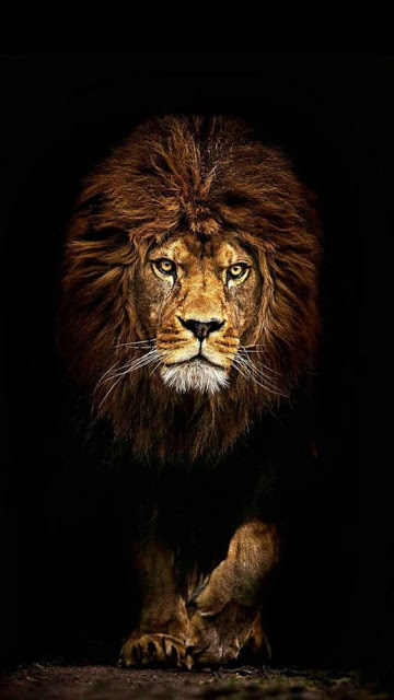 Animal Wallpaper For Android Mobile Iphone Lion Artwork Animal Wallpaper Lion Wallpaper Iphone