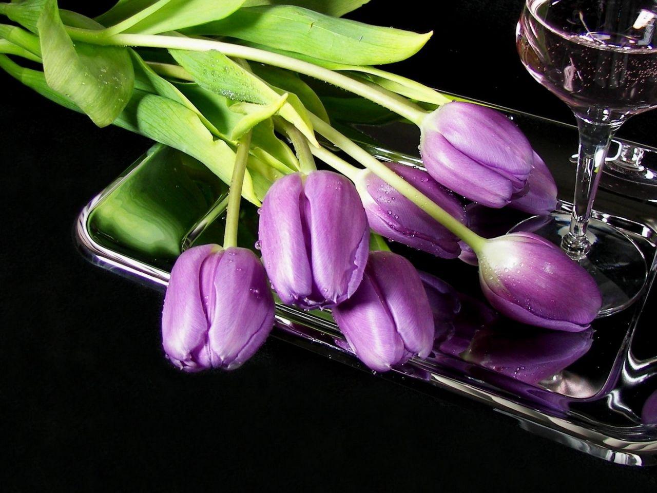 Flores, Tulipanes Imágenes Wallpapers, Vector De Cristal