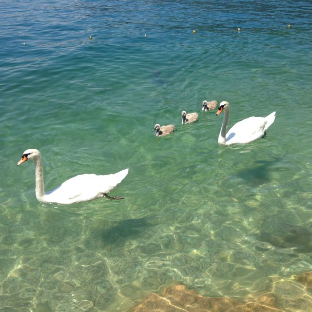 Nice family of ugly ducklings