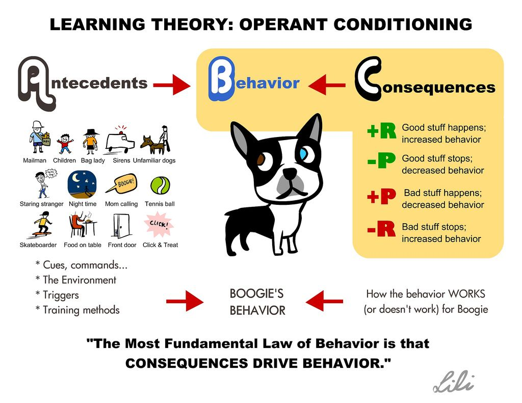 Abc Learning Theory Operant Conditioning Learning Theory Dog
