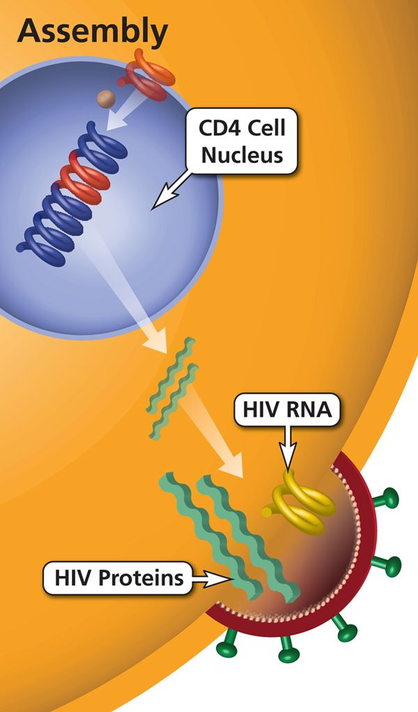 Assembly: Any HIV-related illness included in the Centers for