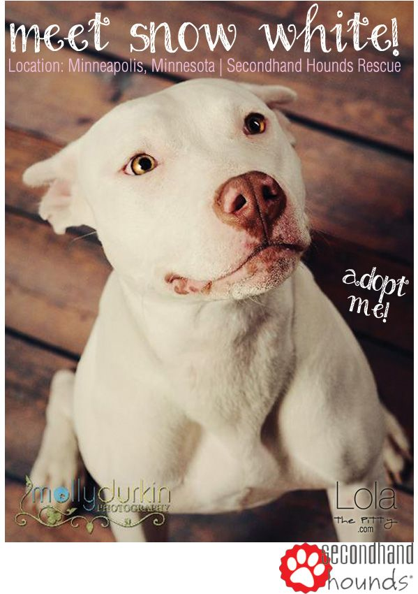 Snow White Adoptable Dog Of The Week Featured On Lolathepitty