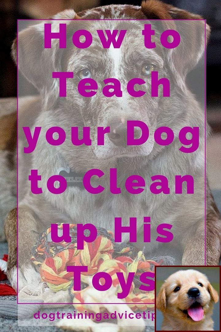 House Training A Puppy In 7 Days And Dog Training Classes Great