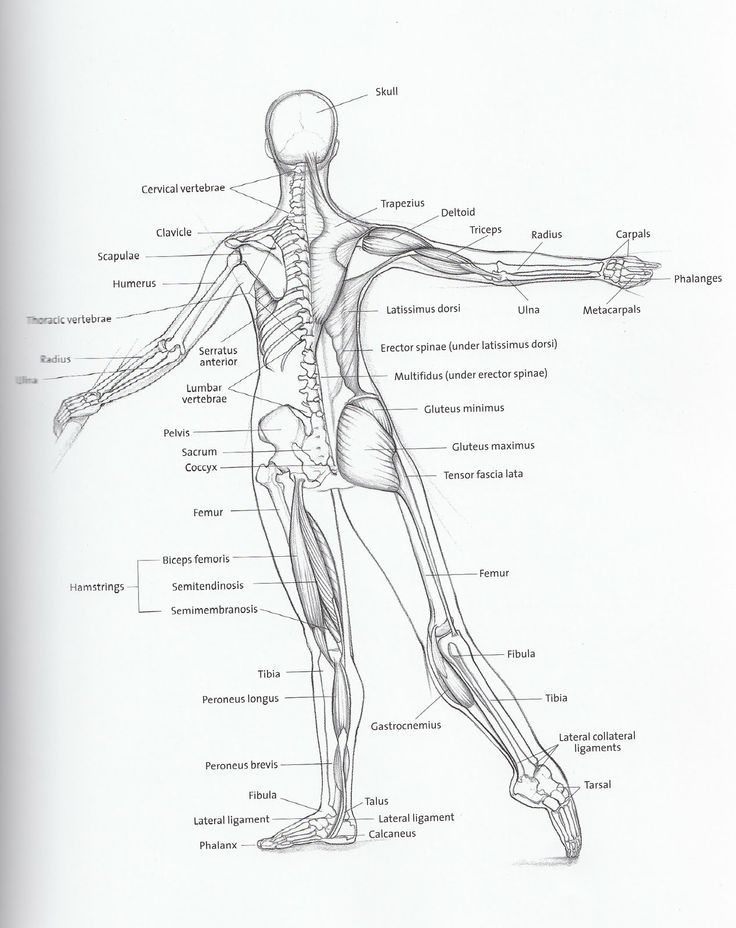 Dancer Anatomy | Work Inspiration | Pinterest | Anatomy, Dancers and ...