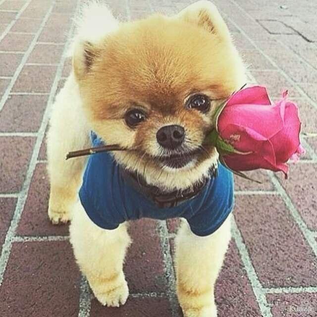 Pin By Niseda Albayrak On Whatsapp Profil Resimleri Cute Animals Cute Baby Dogs Cute Funny Animals