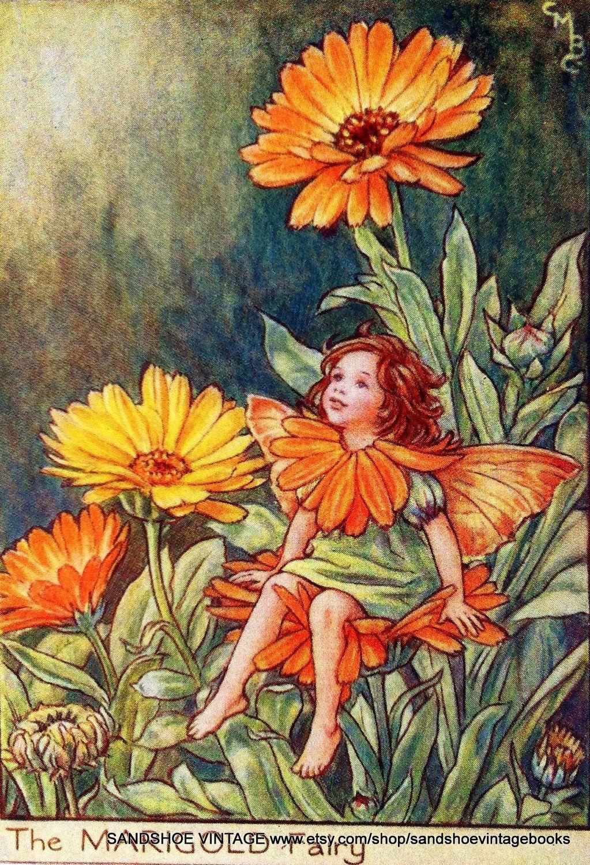 Cicely Mary Barker Arte Com Fadas Fadas Lindas Fadas Vintage