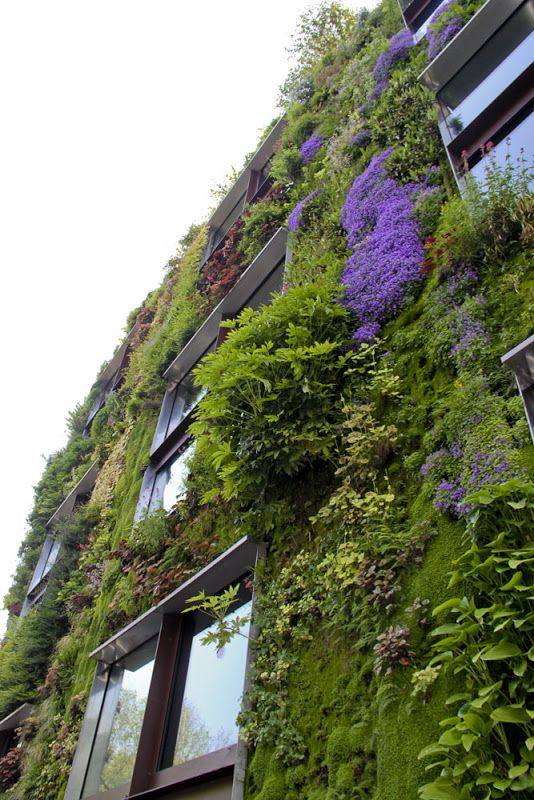 Paris vertical garden - musee du quai Branly | Vertical / Rooftop ...