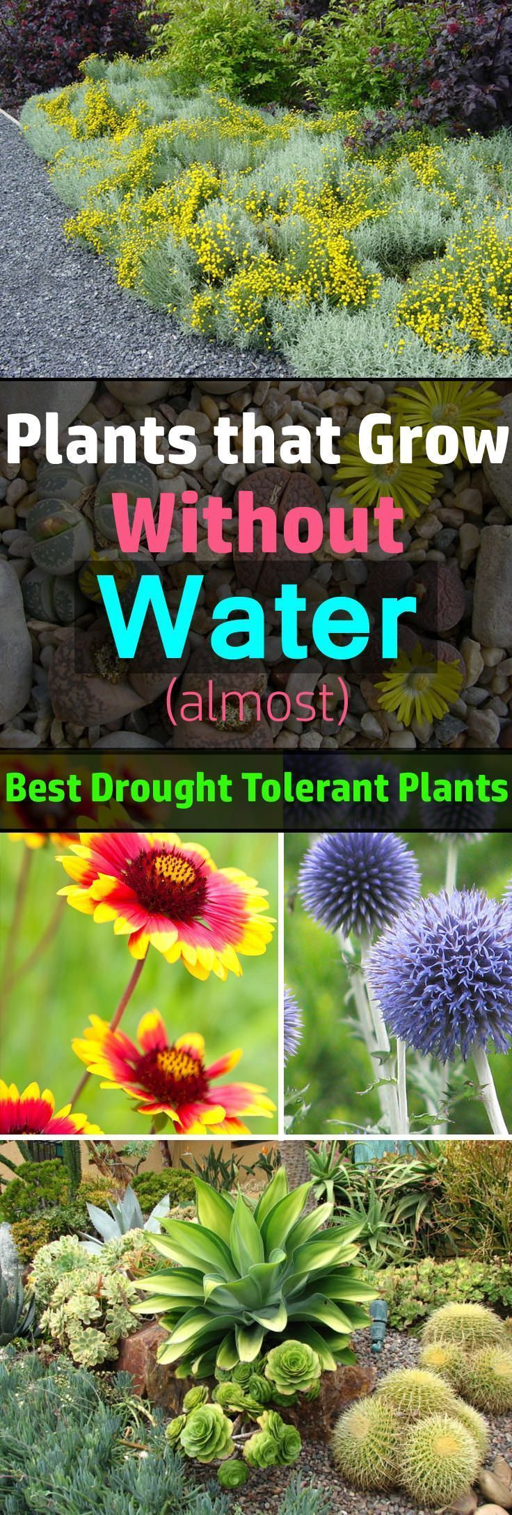 Best Drought Tolerant Plants That Grow In Lack Of Water