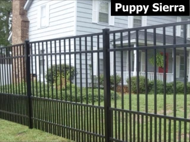 Aluminum Fencing Puppy Proof On The Bottom Fence Design