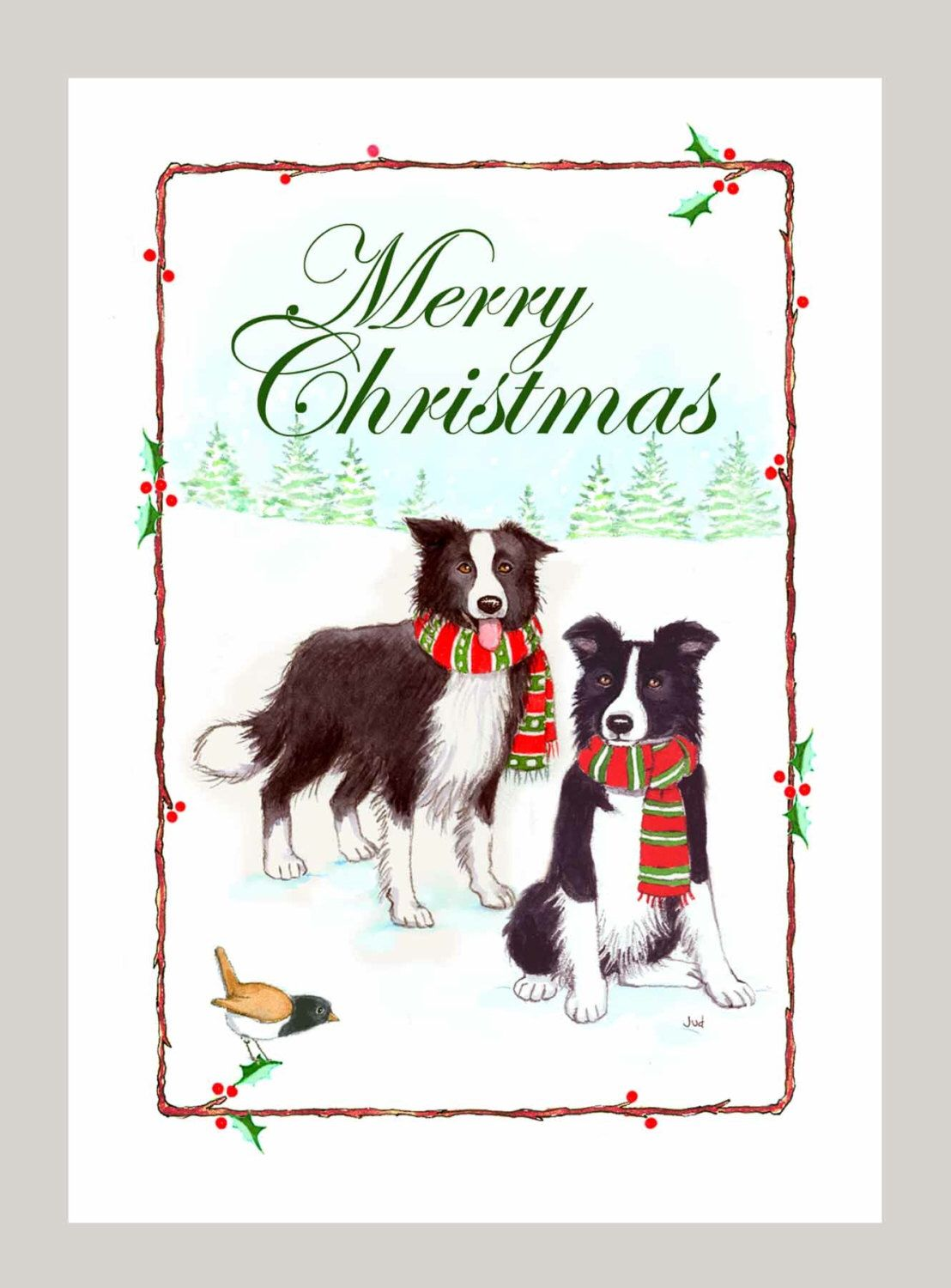Border Collies Christmas Cards, Box of 16 Cards and 16 White ...