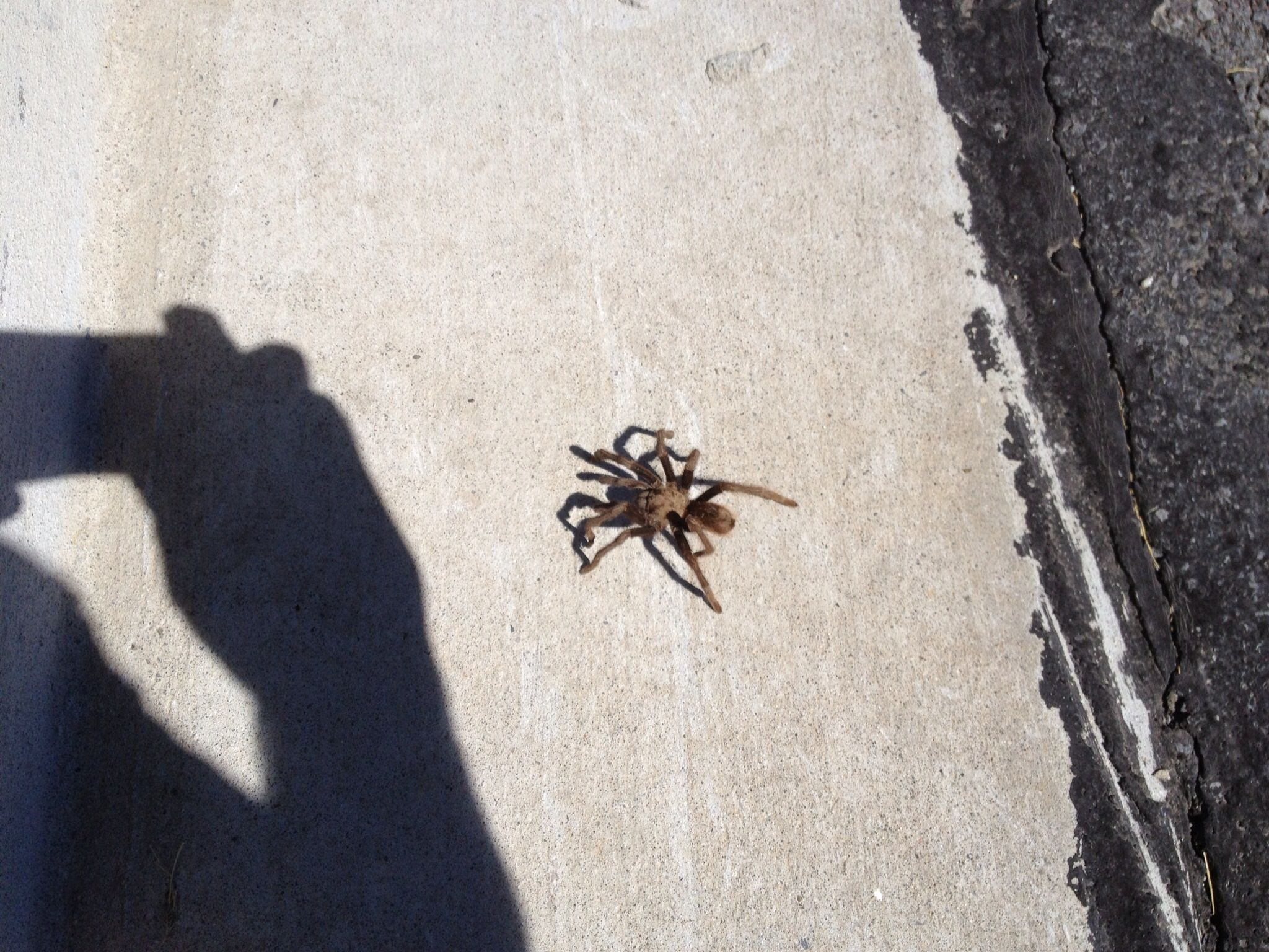 That is a spider the size of my foot