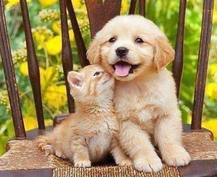 Jene Tiere Verschiedener Spezies Mussten Zwillinge In Einem Anderen Leben Sein 動物 子猫 かわいいペット