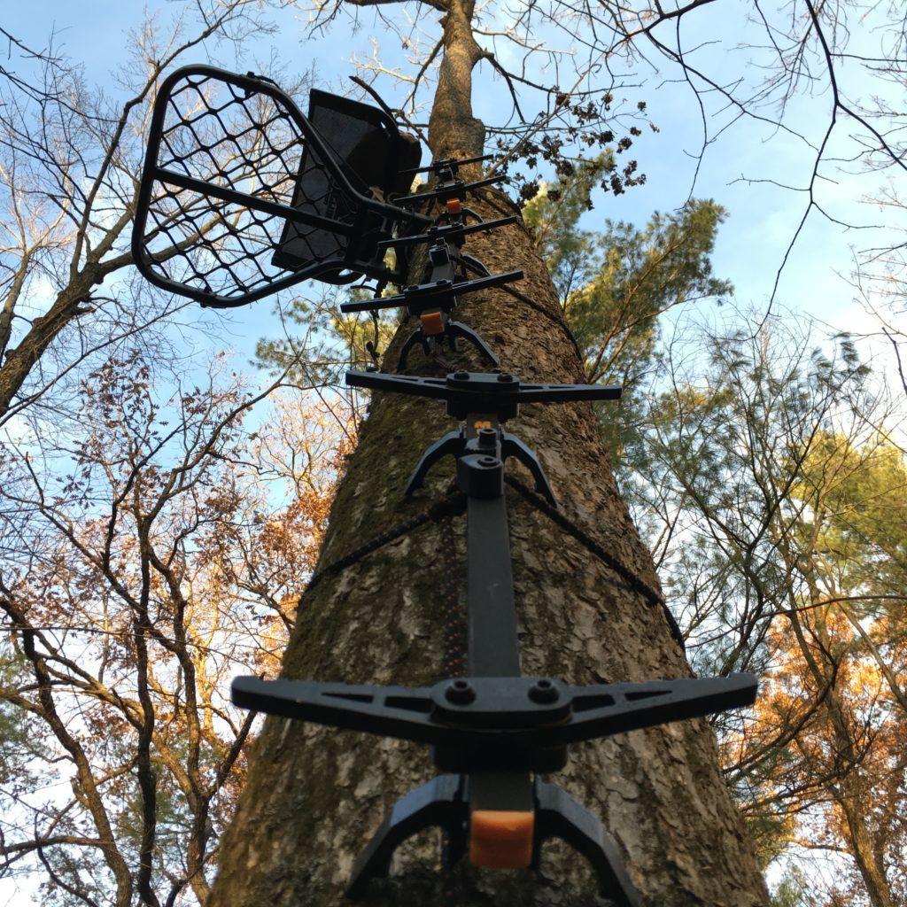 Pin on Deer Habitat