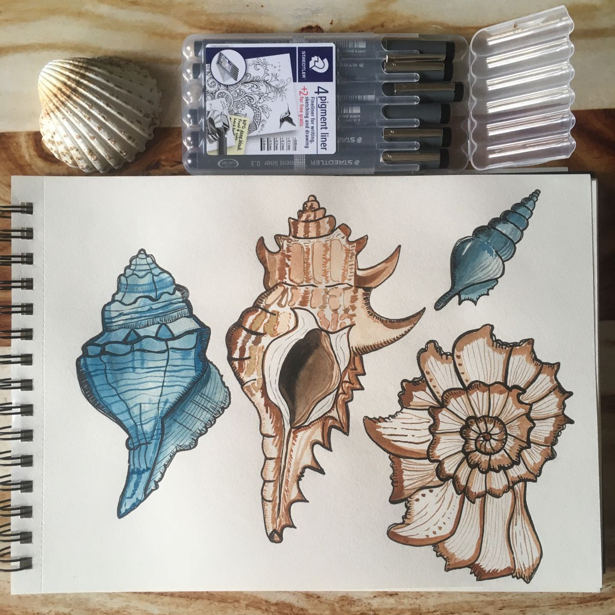 This is a original watercolor sketch of sea shells. Size A4  You can find more art like this on Instagram @frau_mari_illustration   #watercolorillustration #childrenillustration #watercolorart #watercolorartist #illustration #illustrator #howtopaint #acuarela #cottageart #cottagedecor #cottagegarden #oceanlovers #oceanart #seashells #animalillustration