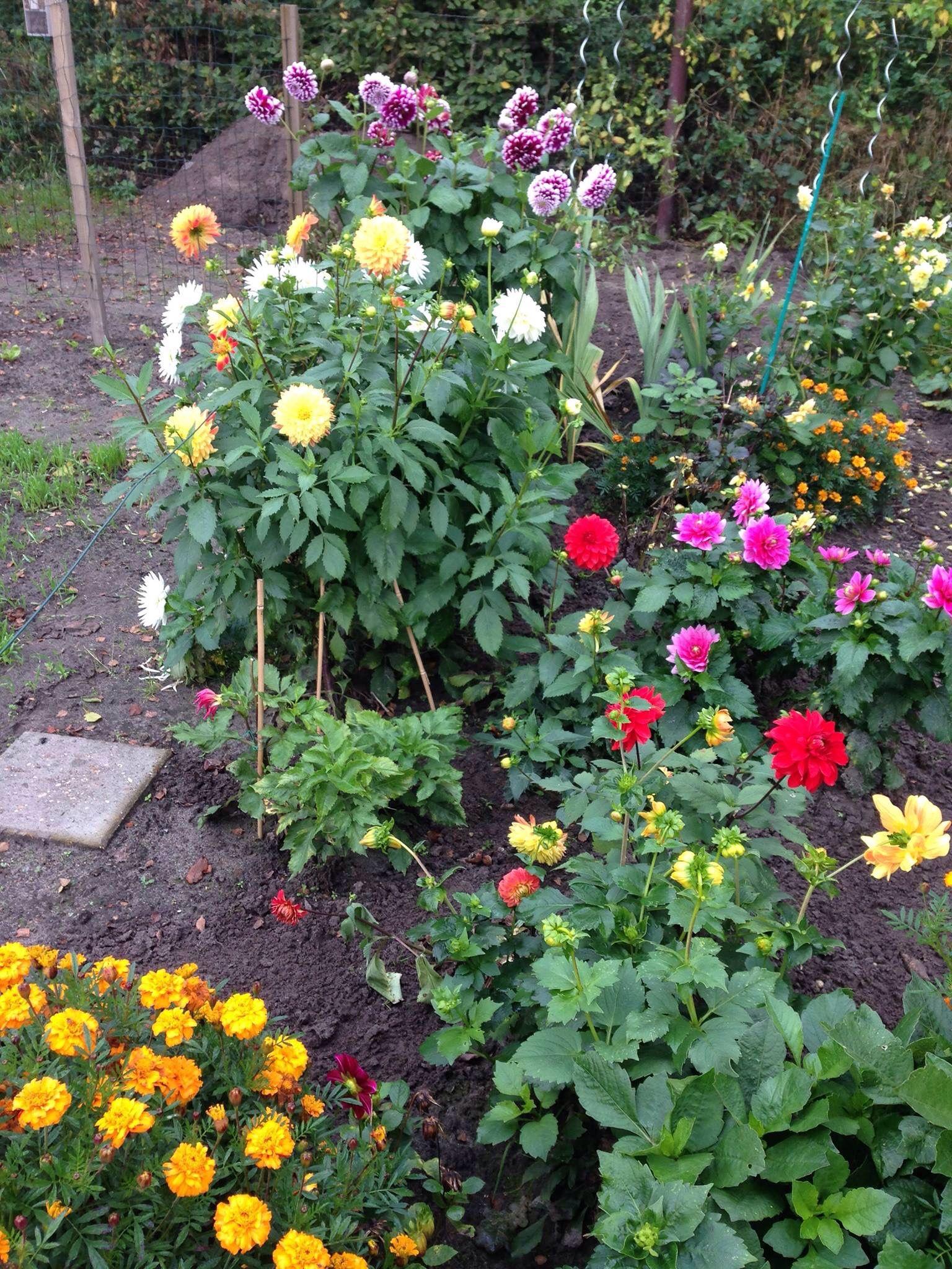 Flower bed flower beds zinnias flowers