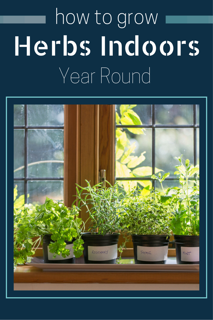 Find Out How To Grow Herbs Indoors Year Round