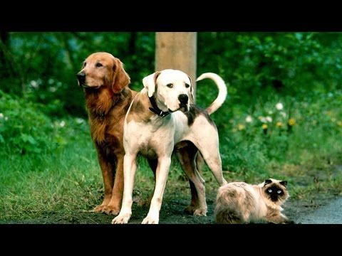 Cats And Dogs 2001 Alec Baldwin Tobey Maguire Jeff Goldblum Youtube Childhood Dog Movies Childhood Memories