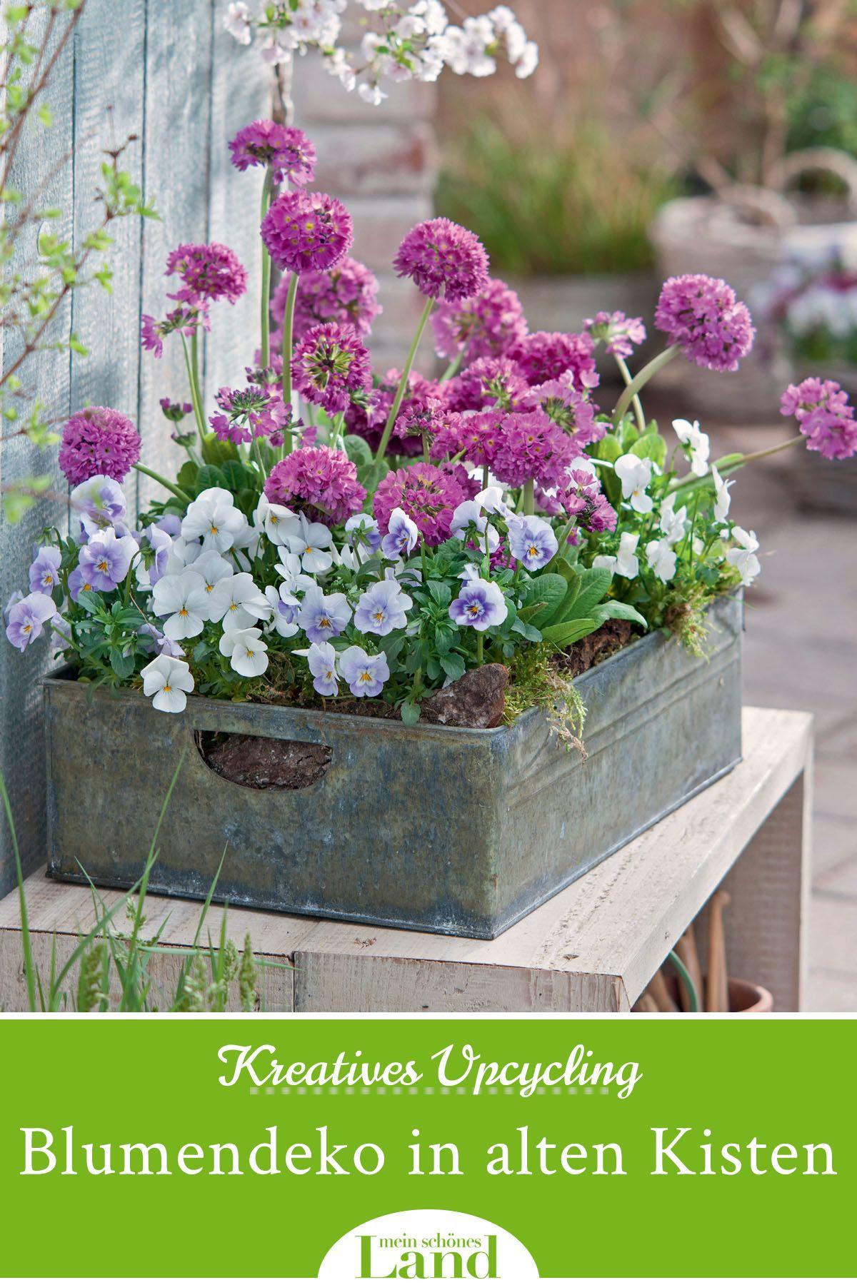 Kreatives Upcycling Blumendeko In Alten Kisten Fruhling Blumen Fruhlingsblumen Blumendeko