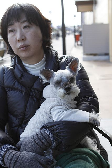 One of my favorite schnauzers on Pinterest with his mom! So cute!!! :D