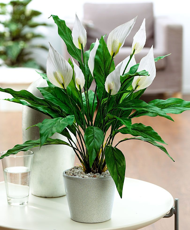 peace lily spathiphyllum artificial plant garden care from