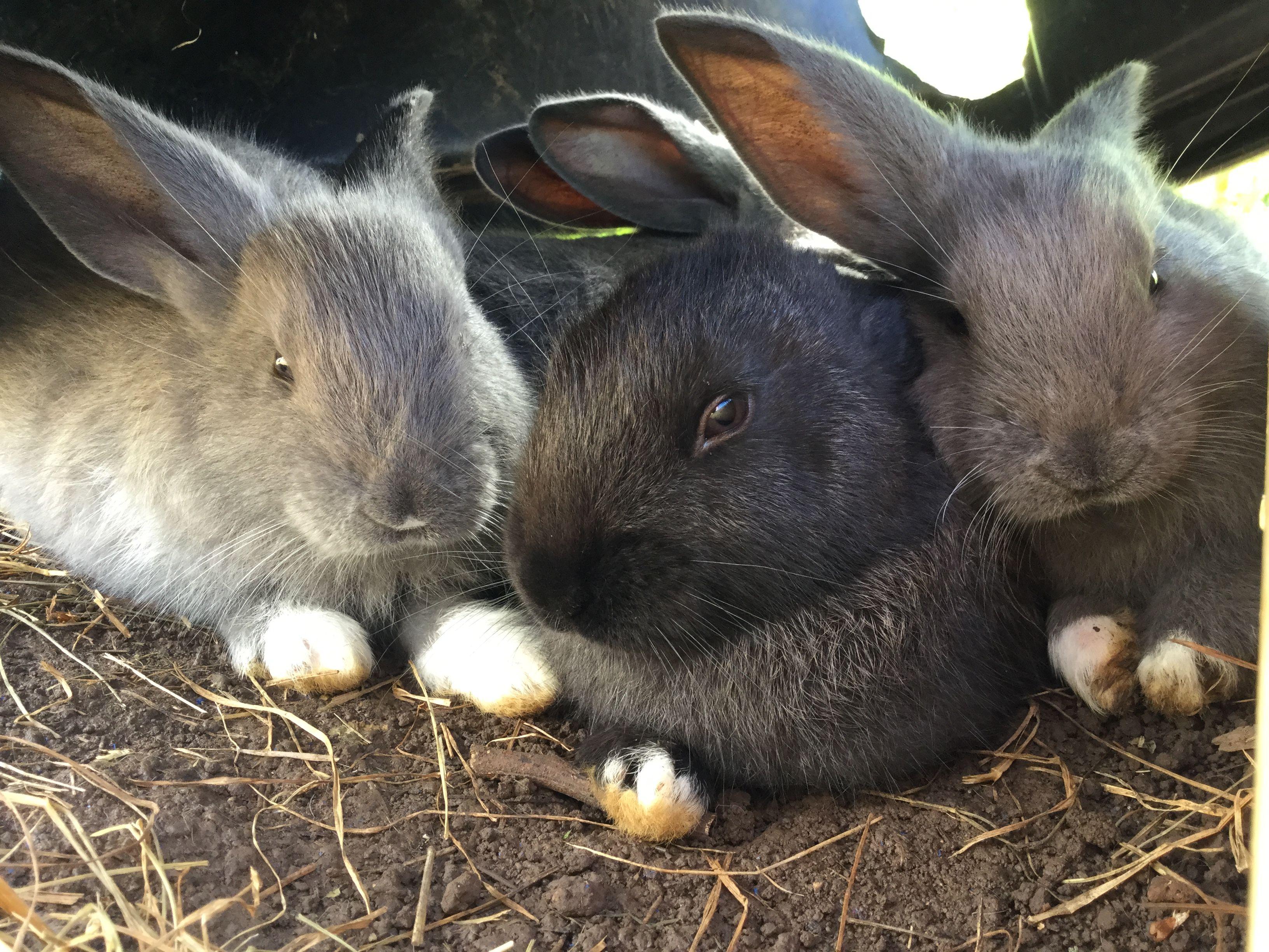 Pin Von Heike Schwan Auf Hasen Kaninchen Hase
