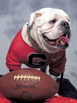 Pin By Eric Lawrence On God Loves Dog Georgia Bulldog Mascot